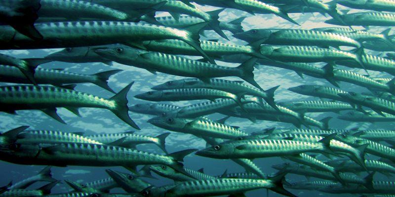 Fixed IP SIMS fish farm